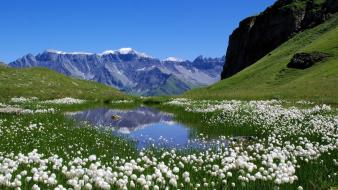 Nature switzerland lakes alps meadows white flowers wallpaper