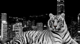 Tiger And The City wallpaper