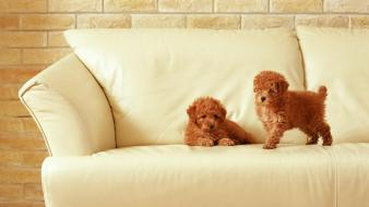 Two Puppies On Sofa wallpaper