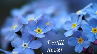 Flowers text forget-me-nots blue wallpaper