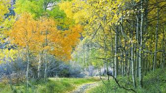 Forest california aspen sierra eastern wallpaper