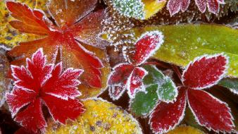 Forest leaves frosty wallpaper