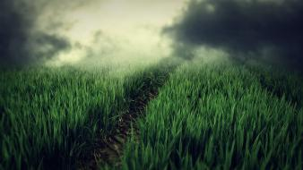 Grass fields path hills fog plants way wallpaper