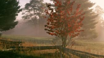 Light sunrise autumn (season) west foggy dogwood virginia wallpaper