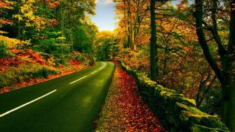 Nature trees path roads wallpaper