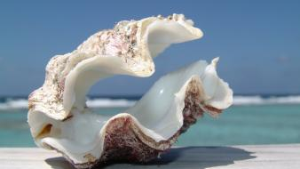 Ocean seashells depth of field blue skies wallpaper