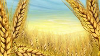Paintings multicolor wheat wallpaper