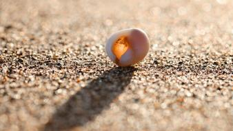 Sand bokeh pebbles seashells wallpaper
