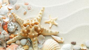Sand starfish seashells white Wallpaper