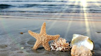 Sunlight starfish seashells depth of field sea Wallpaper