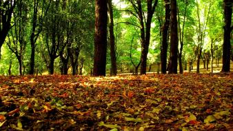 Trees forest leaves brown Wallpaper
