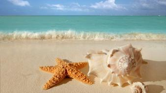 Waves starfish seashells depth of field sea Wallpaper