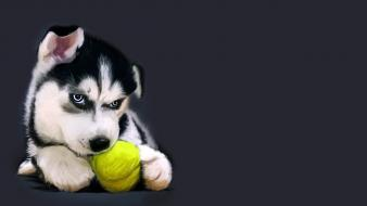 Animals dogs tennis balls wallpaper