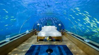 Aquarium beds wallpaper