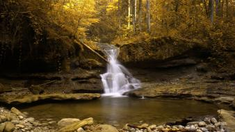 Forests golden nature rocks streams wallpaper