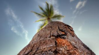 Palm trees worms eye view wallpaper