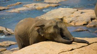 Animals baby elephant elephants wildlife wallpaper