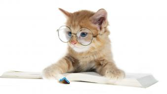 Animals books cats glasses wallpaper