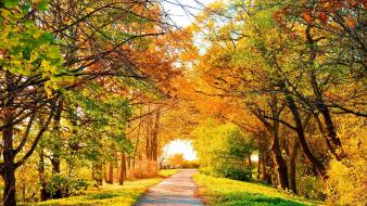 Autumn landscapes streets trees wallpaper