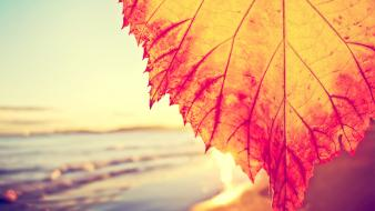 Autumn leaves sea wallpaper