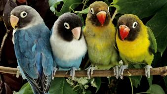 Birds love bird nature parrots wildlife Wallpaper