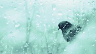 Birds rain water wet wallpaper
