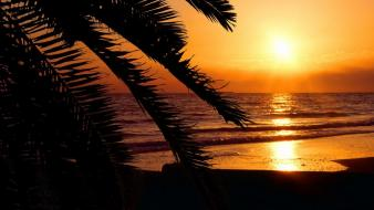 Florida beaches palm trees silhouettes sunset Wallpaper