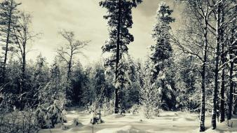 Forests landscapes nature skyscapes snow wallpaper