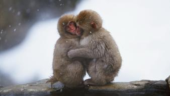 Japanese macaque animals baby cold hugging Wallpaper