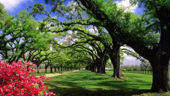 South carolina hall plantation trees wallpaper