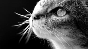 Animals black background cats greyscale wallpaper