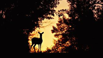 Animals deer mammals nature silhouettes wallpaper