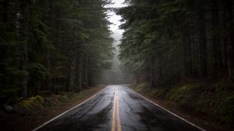 Forests nature rain roads trees wallpaper