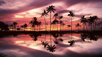 Hawaii oahu beaches palm trees parks wallpaper