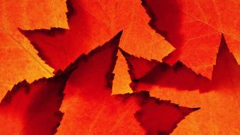 Abstract autumn leaves Wallpaper