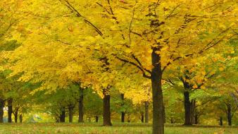 Acer parks trees vermont wallpaper