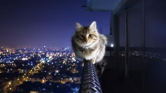 Animals cats cityscapes wallpaper