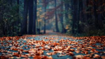Autumn depth of field fallen leaves wood Wallpaper