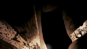 Batman begins bats comics superheroes wallpaper