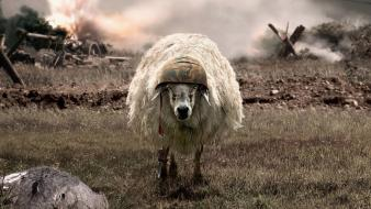 Battlesheep helmets sheep war Wallpaper