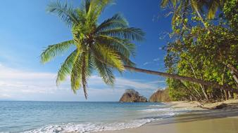 Costa rica pacific beaches coast palm trees Wallpaper