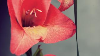 Flowers macro vintage wallpaper