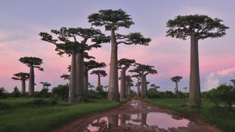 Forests landscapes madagascar nature trees wallpaper