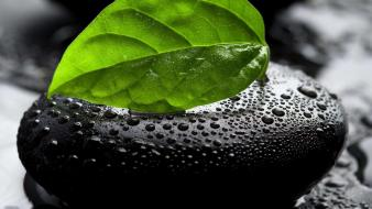 Leaf nature pebbles selective coloring water drops wallpaper