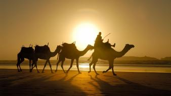 Morocco animals camels sand sunlight wallpaper