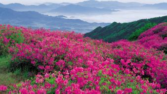 North carolina mountains parkway pink flowers wildflowers wallpaper