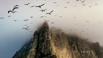 Scotland birds cliffs nature wallpaper