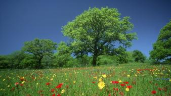 Texas meadows wildflowers wallpaper