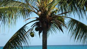 Turks and caicos islands coconut palm trees wallpaper
