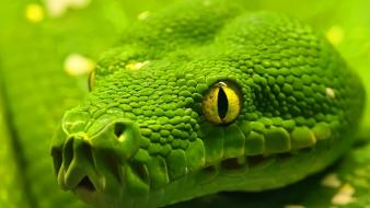 Animals nature snakes wallpaper